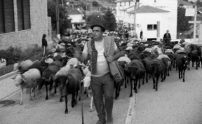 siteG_pastor_sabugueiro_DSCF3819_pb