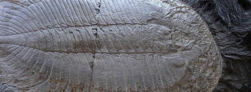 Museu das Trilobites